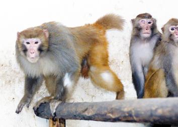 """天津动物园""""灵峪""""即将上演一""""宫廷政变"""""""